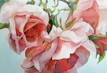 Climbing Rose - Watercolour - 30cm x 30cm