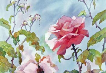The Last Rose - Watercolour - 30cm x 30cm