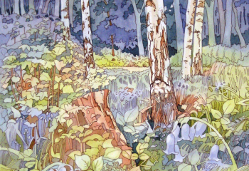 Bluebell Wood - Pen & Watercolour - 50cm x 35cm