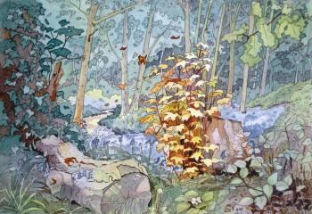 Regrowth - Pen & Watercolour - 25cm x 35cm